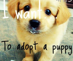 pet, puppy, and cute image
