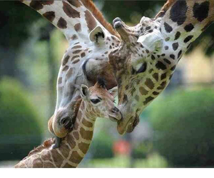 animals, family, and love image