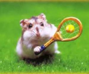tennis and hamster image