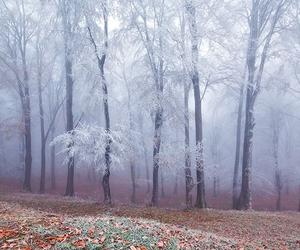 beautiful and beautiful nature winter image