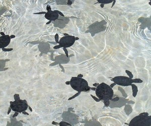 animals, oceans, and sea turtles image