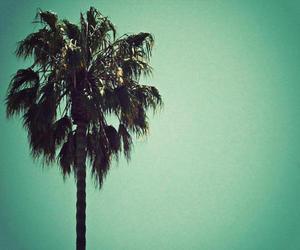 beach, hollywood, and palm tree image
