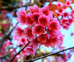 flower, pink, and nature image