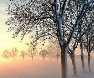 fog, snow, and winter image