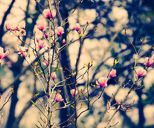 bokeh, branches, and flower image