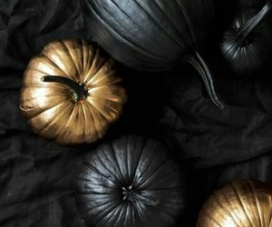 autumn, gold, and black image