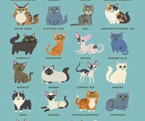 cat, animal, and breed image