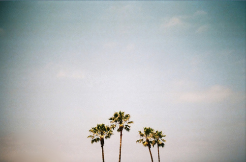 palm trees and photography image