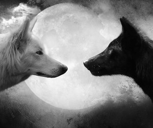 wolf, moon, and white image