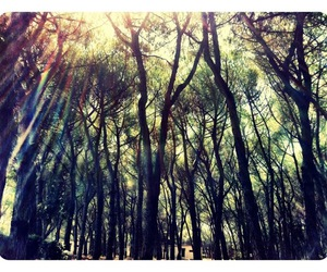 forest, mysterious, and nature image