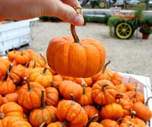 fall, Halloween, and inspiration image