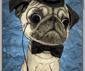 dog, pug, and vintage image