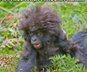 funny, alarm, and monkey image