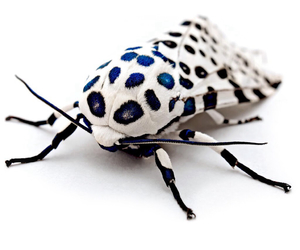 blue, insect, and white image