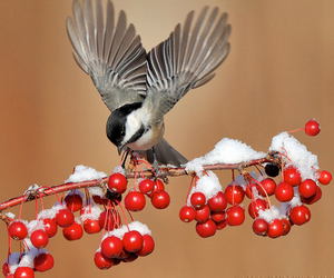 animal, berries, and branch image