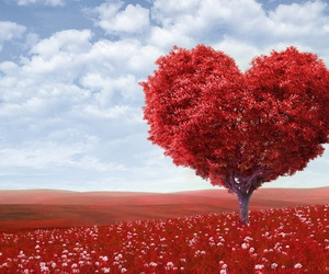beauty, love, and heart image