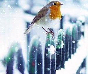 snow and bird image