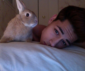 boy, rabbit, and pale image