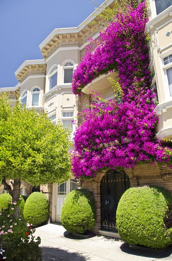 balcony, purple, and beauty image