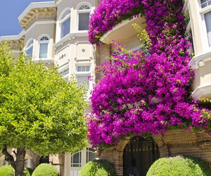 balcony, flowers, and purple image
