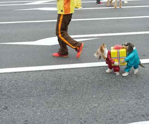 dog, funny, and costume image