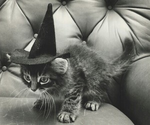 black and white, Halloween, and hexe image
