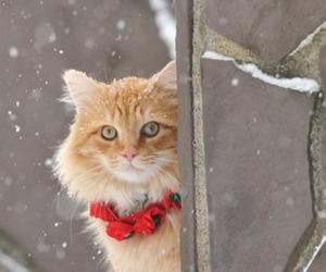 cat, pet, and snow image