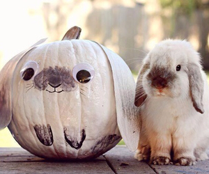 cute, bunny, and pumpkin image