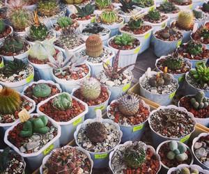 beautiful, cactus, and nature image