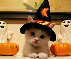 cat, Halloween, and kitten image