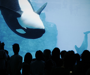 people, whale, and animal image