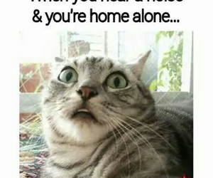 funny, cat, and alone image