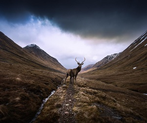 deer, adventure, and mountains image