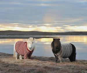 pony, scotland, and sweater image
