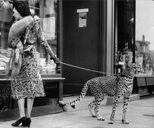 vintage, black and white, and cheetah image