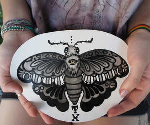mariposa, moth, and old school image
