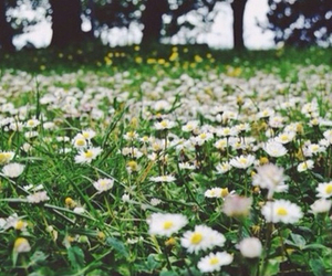 grunge, daisy, and flowers image