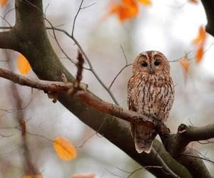 owl, autumn, and fall image