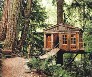 tree house, forest, and treehouse image