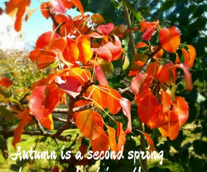 autumn, coloredleaves, and autumnleaves image