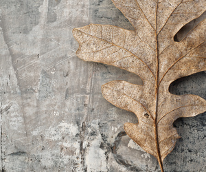 leaf and photography image