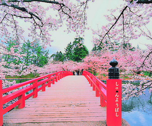 japan, bridge, and flowers image