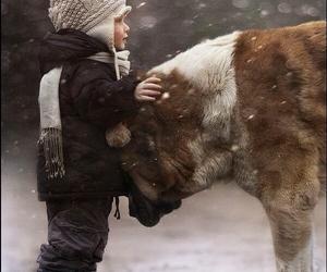 dog, child, and snow image
