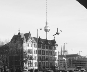 berlin, bird, and city image