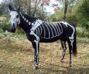 Halloween and horse image