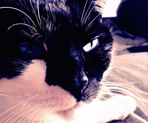 cat, effect, and pretty image