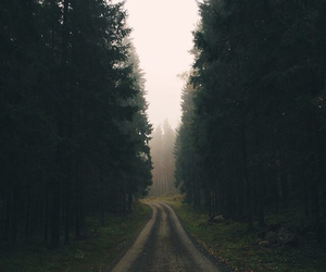 forest and indie image