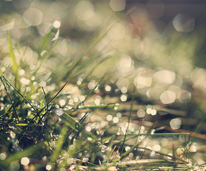 bokeh, frost, and grass image