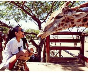 rihanna, giraffe, and animal image
