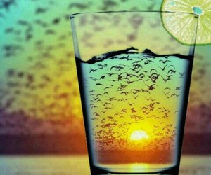 birds, photography, and drink image